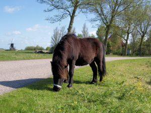 De pony van de boerderij